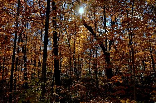 trees orange fallleaves sun tree fall leaves yellow forest leaf illinois il kanecounty treebranches treebranch kettles elburn kames kanecountyforestpreserve johnsonsmound glacialgravelkameskettlesprairies blackberrytownship