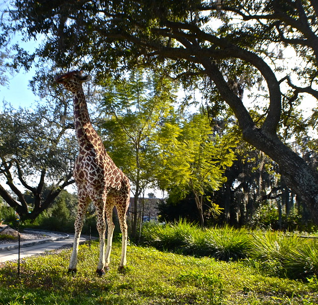 Legoland, Florida -  Giraffes at safari ride