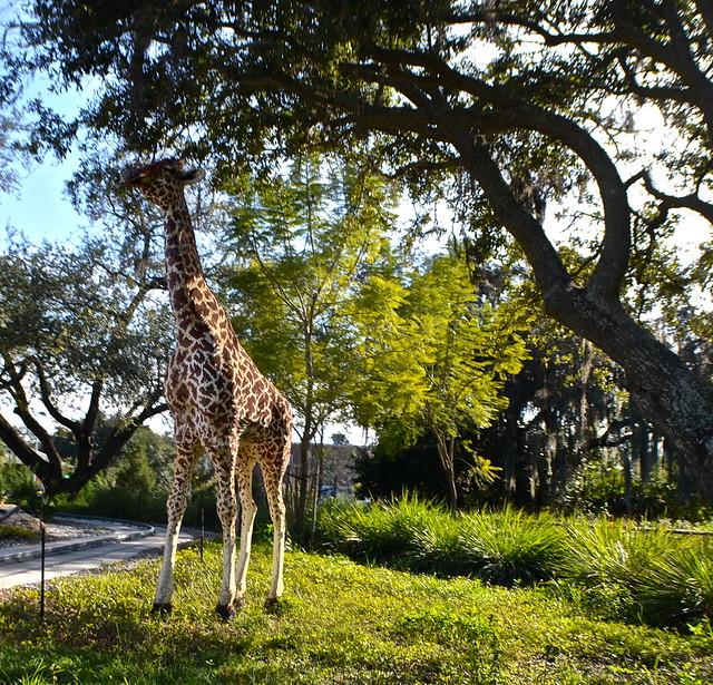 Legoland, Florida -  Giraffes at safari ride