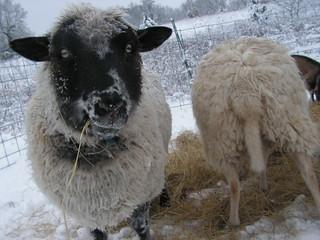 john eats hay