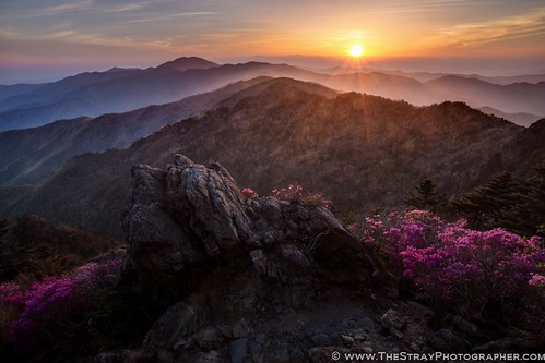 travel flowers sunset mountains trekking landscape purple hiking southkorea jirisan sunsetcolors sunsetcolours rightplaceattherighttime jirisannationalpark