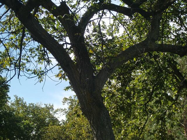 yellow-rumped warbler spring lake park