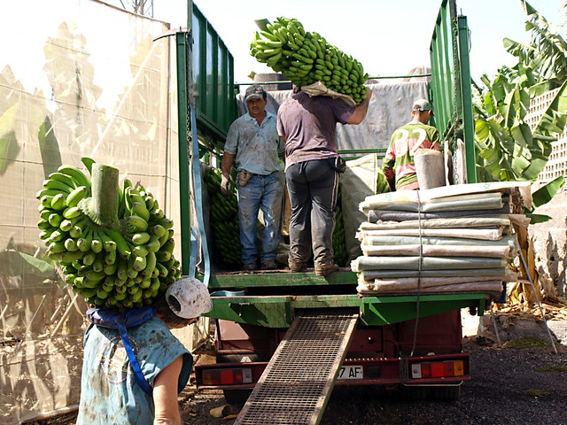 Banana workers, Tenerife