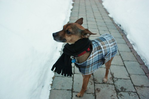 diy-dog-scarf