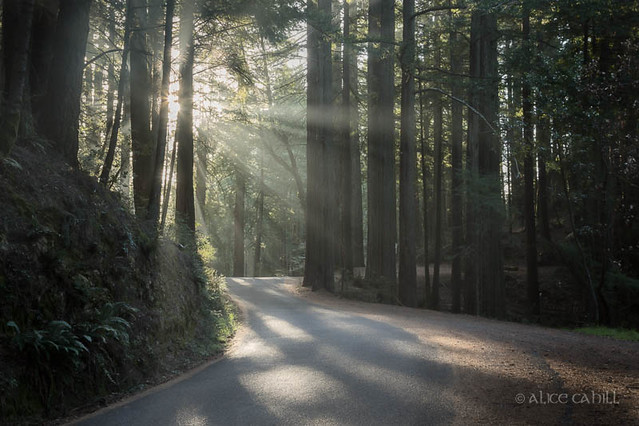 The Road Towards Light