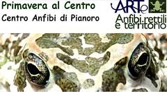 anfibi rettili & territorio