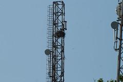 electricity, antenna,