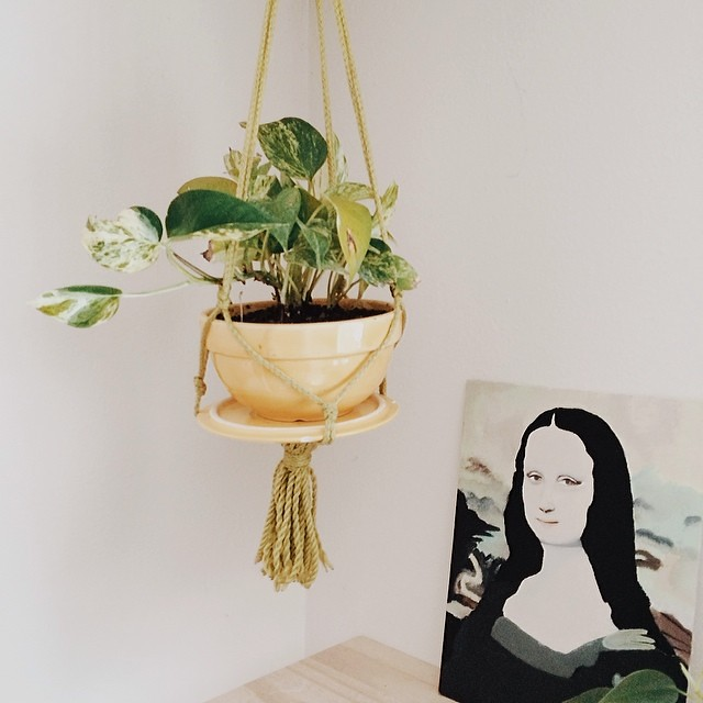 Our newest plant addition. Mona thinks it needs water.  #houseplant #monalisa #instaplant