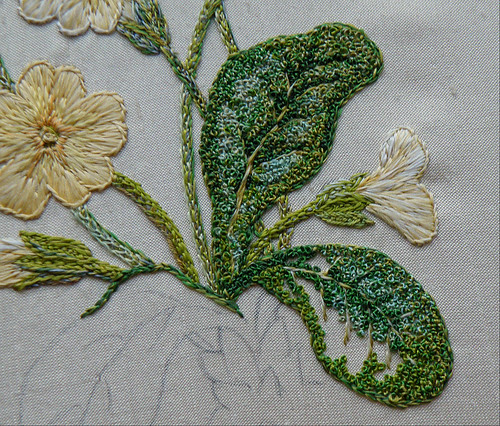 Primrose in silk, 5 - leaves started