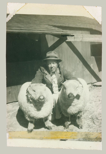 Man and two sheep