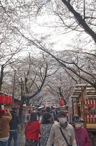 【写真】2014 桜 : 平野神社/2020-06-29/IMGP5572