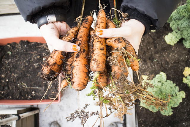 Winter Harvest_9