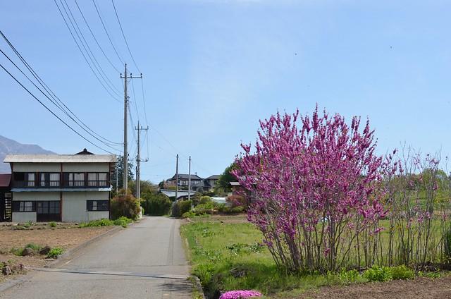 山梨県小淵沢散歩 2014年5月11日
