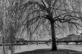 L'arbre à fils