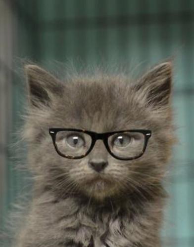 Langston_Glasses