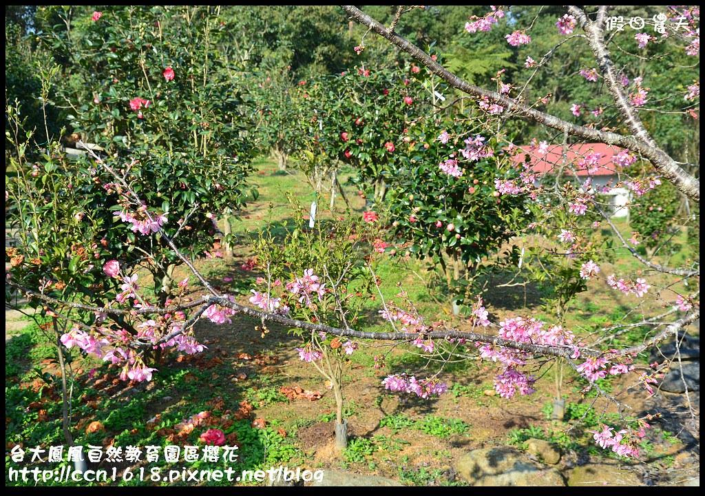 台大鳳凰自然教育園區櫻花DSC_6115