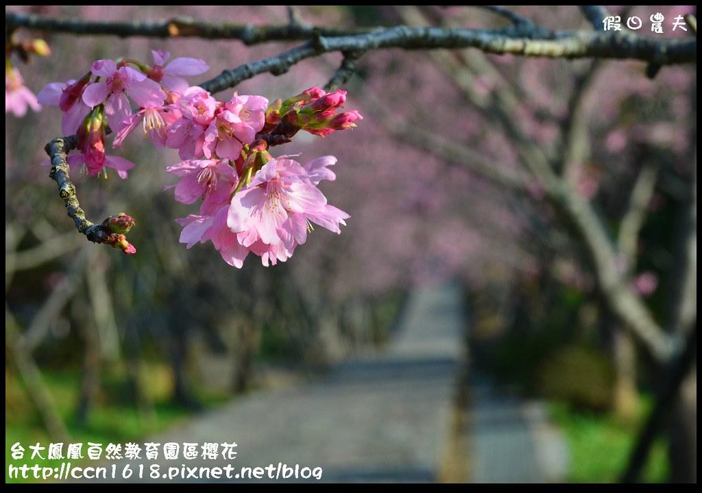台大鳳凰自然教育園區櫻花DSC_5946