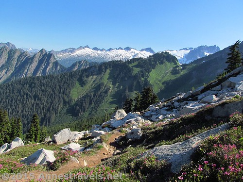 Early morning along the ridge on the Hidden Lake Lookout Trail, Mount Baker-Snoqualmie National Forest and North Cascades National Park, Washingtoin