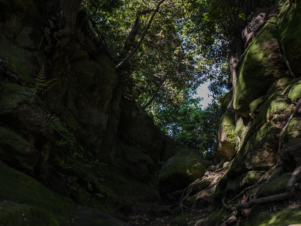 2016GWお散歩㉘_天園ハイキングコース