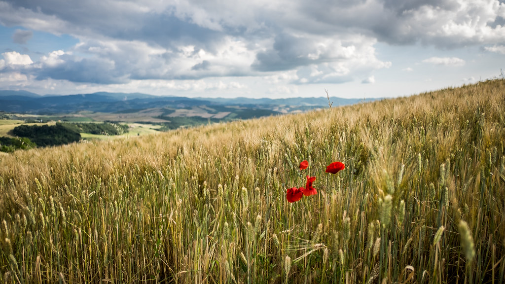Tuscany in red, Volterra, Pisa picture