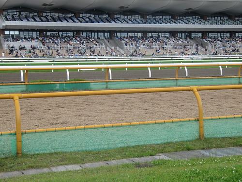 函館競馬場のウッドチップコース