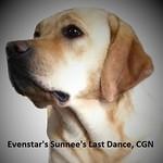 """Fini"" Evenstar's Sunnee's Last Dance, CGN"