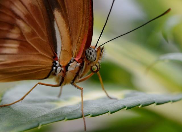 Butterfly Macro! | F