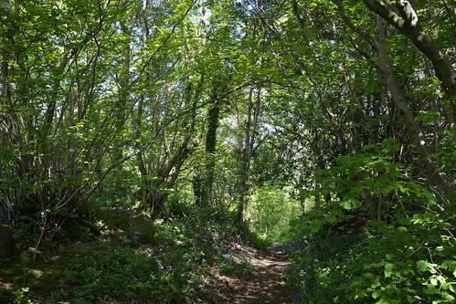 Plowden Woods