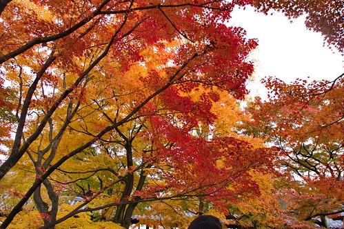 【写真】2012 紅葉 : 東福寺(2)/2017-11-27/IMGP7162
