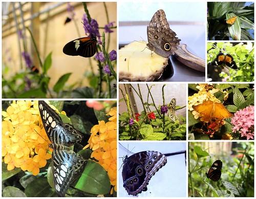 Butterflies DC
