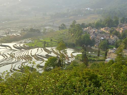 Yunnan13-Yuanyang 1-Duoyishu (89)