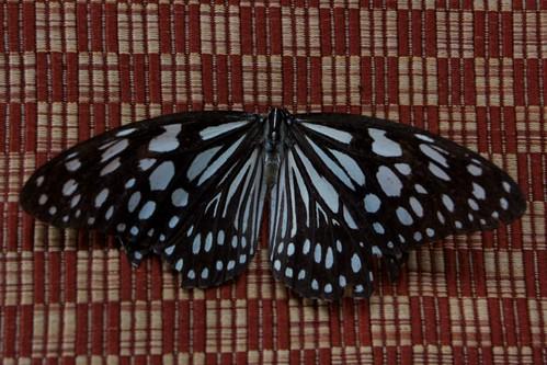 Butterfly by leonard0x