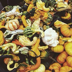 Farmers Market in Autumn