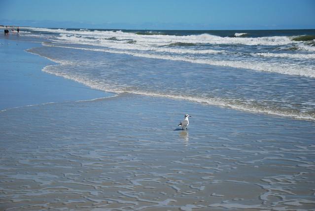 Huntington State Beach Waves