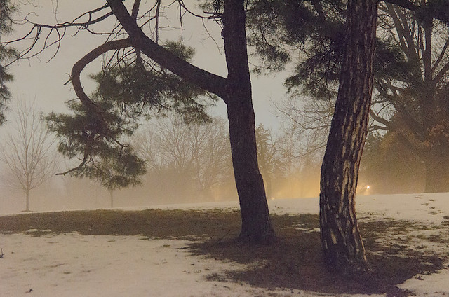 Francis Park, in Saint Louis, Missouri, USA - trees in snow and fog - 8