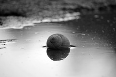 Silver Snail Shell