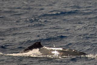 Tonga Offshore-31