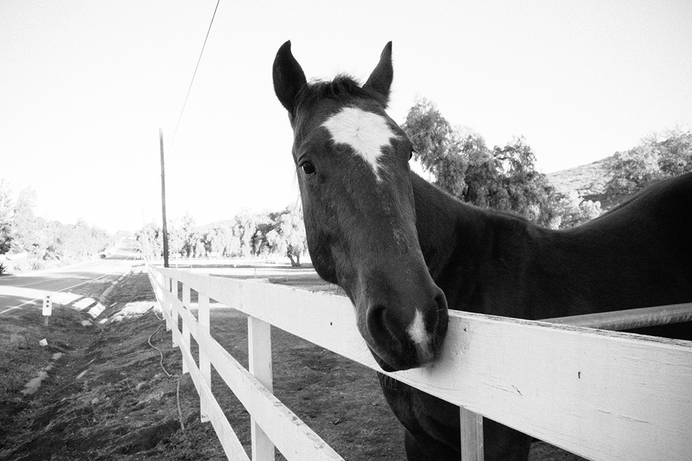 horse_1_web