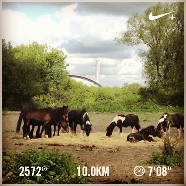 Next goal to keep this distance >1h #nikeplus #werunformatthias #runnerscommunity #running