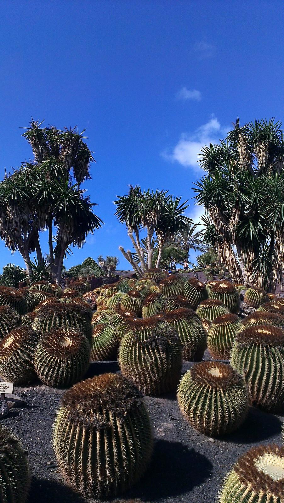 Fuerteventura_2014_18