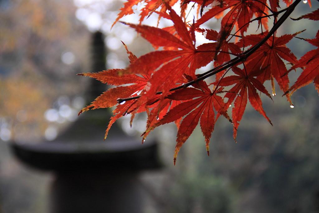Autumn At Heirinji Temple, Tokyo