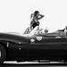 Jaguar Vs. Cougar by rosario liberti | milanofixed
