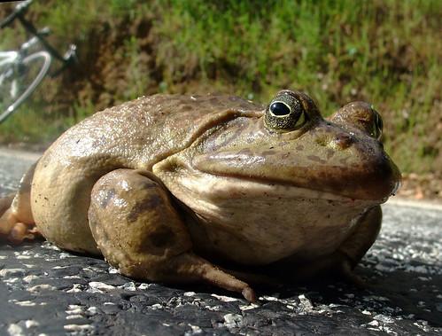frog DMD part 2_0368