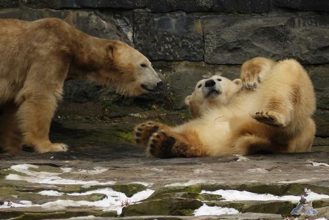 Tierpark Berlin 07.02.2015   131