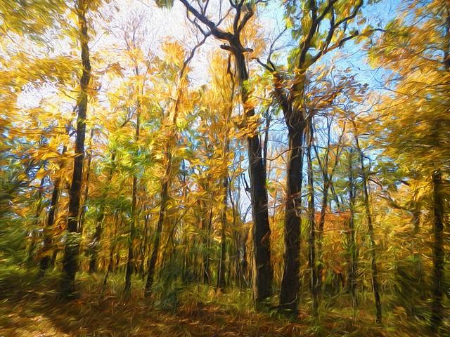 Zoi Trail Fall Woods Skywatch