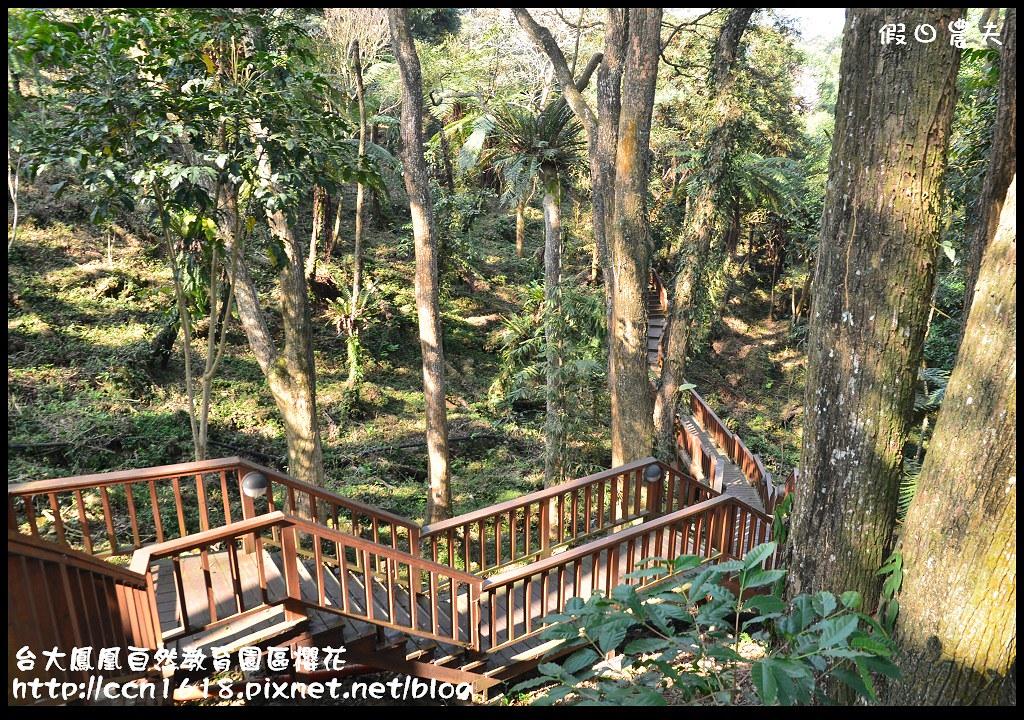 台大鳳凰自然教育園區櫻花DSC_6140
