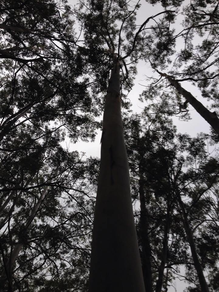 Aiea Loop Trail trees