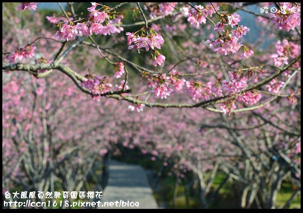 台大鳳凰自然教育園區櫻花DSC_6028