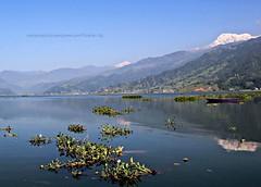 Fewa Taal Pokhara