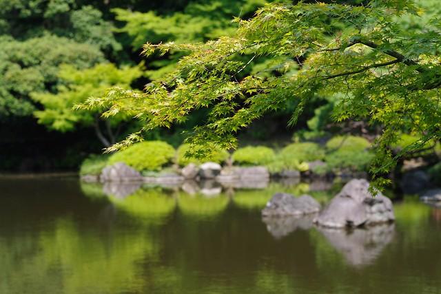 2016/05/21_古河庭園バラフェスタ-35